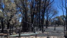 Pożary na przedmieściach Perth w Australii Zachodniej (PAP/EPA/RICHARD WAINWRIGHT)