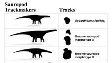 Ślady Zauropodów znalezione w Broome (University of Queensland/Steve Salisbury)