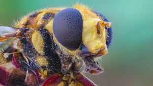 """Drastycznie spada liczba owadów. """"Skutki dla naszej planety będą katastrofalne"""""""