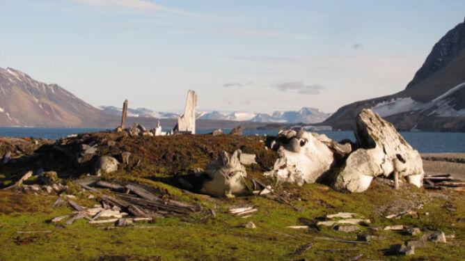 """""""Pieśń wielorybników na Svalbardzie"""". Cmentarzysko morskich ssaków"""