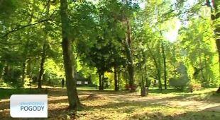 O wpływie pogody na wegetację drzew